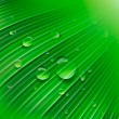 Green leaf with drops of water - Stok Vektör