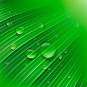 绿叶与水珠 — 图库矢量图片