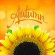 Stock Vector: Floral autumn background with sunflower