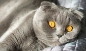 Sunny cat with orange eyes — Stock Photo