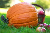 Pumpkin and apples on the farm field — Stock Photo