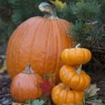 dynie w ogrodzie jesienią — Zdjęcie stockowe #32916433