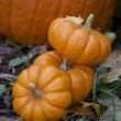 Stock Photo: Pumpkins in the fall garden