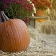 A pumpkin and autumn flowers on the hay — Stock Photo