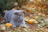 Cat and pumpkins in the fall farm garden — Photo