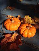 Little Halloween pumpkins with autumn/fall leaves for home/porch decor — Stock Photo