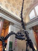National Museum of Natural History, NYC, USA Dinosaurs — Stock Photo