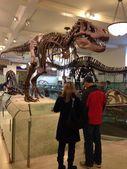 National Museum of Natural History, NYC, USA Dinosaurs — Stock Photo
