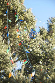 Christmas lights on the pine tree — Stock Photo