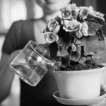Woman arranging flowers — Stock Photo #39418773