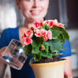 Young woman arranging flowers — Stock Photo #50721191