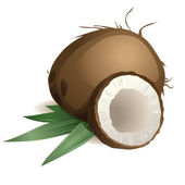 Coconut with leaves — Stock Vector