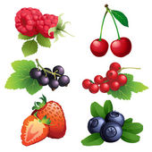 Ripe strawberry, raspberry, cherry, blackberry, black and red cu — Stock Vector