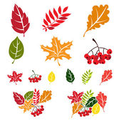 Autumn leaves set. Flat style — Stock Vector
