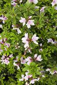 Zomer wilde bloemen — Stockfoto