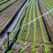 Water sprinkler system working on nursery plantation — Stock Photo #26436573