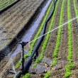 Water sprinkler system working on a nursery plantation — Stock Photo