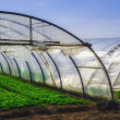 Interior of Greenhouse for salad cultivation — Stock Photo #26438723