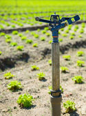Watering equipment fields — Stock Photo