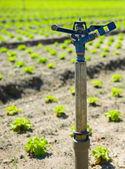Irrigazione campi attrezzature — Foto Stock