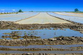 View on a flood field with cover — Stock Photo