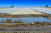 Visa på en översvämning fältet med lock — Stockfoto