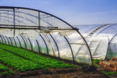 Interior of Greenhouse for salad cultivation — Stock Photo