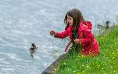 Pretty little girl feeding ducks at the water's edge — Stock Photo