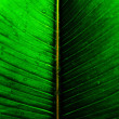 Macro picture of a very beautiful green leaf — Stock Photo