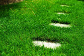 Closeup of beautiful grass with curbstone — Stock Photo