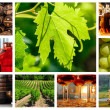 Collage about vineyard and wine industry — 图库照片