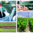 Collage of Gardening and Greenhouse — Stock Photo