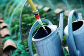 Gardening, fill watering can of water for watering the plants in — Stock Photo