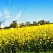 Nuclear power plant and colza fields — Stock Photo #45609795