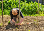 Establishment of guardians in the vegetable garden — Stock Photo