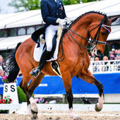 Dressage horse and rider - collected trot — Stock Photo