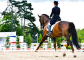 Dressage horse and woman rider - extended trot — Stock Photo