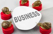 Snail business meeting metaphor — Stock Photo