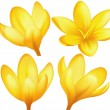 Vector yellow crocuses — Vettoriali Stock