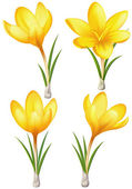 Set of yellow crocuses — Stock Vector
