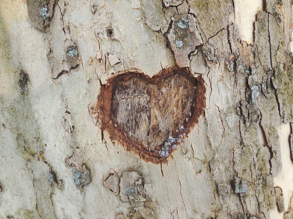Heart carved in tree bark texture — Stock Photo #22243743