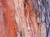 Tree bark — Stock Photo
