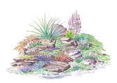 Jardinería jardín alpino — Foto de Stock