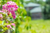 Fleurs roses — Photo