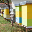 Multi-colored bee hive — Stock Photo