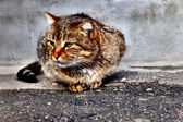 Sitting cat — Foto de Stock