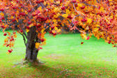 Autumn Rowan tree — Stock Photo