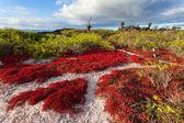 Floreana Island — Stock Photo