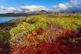 Floreana eiland — Stockfoto