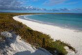 The beach Tortuga bay the island Santa Crus — Stock Photo